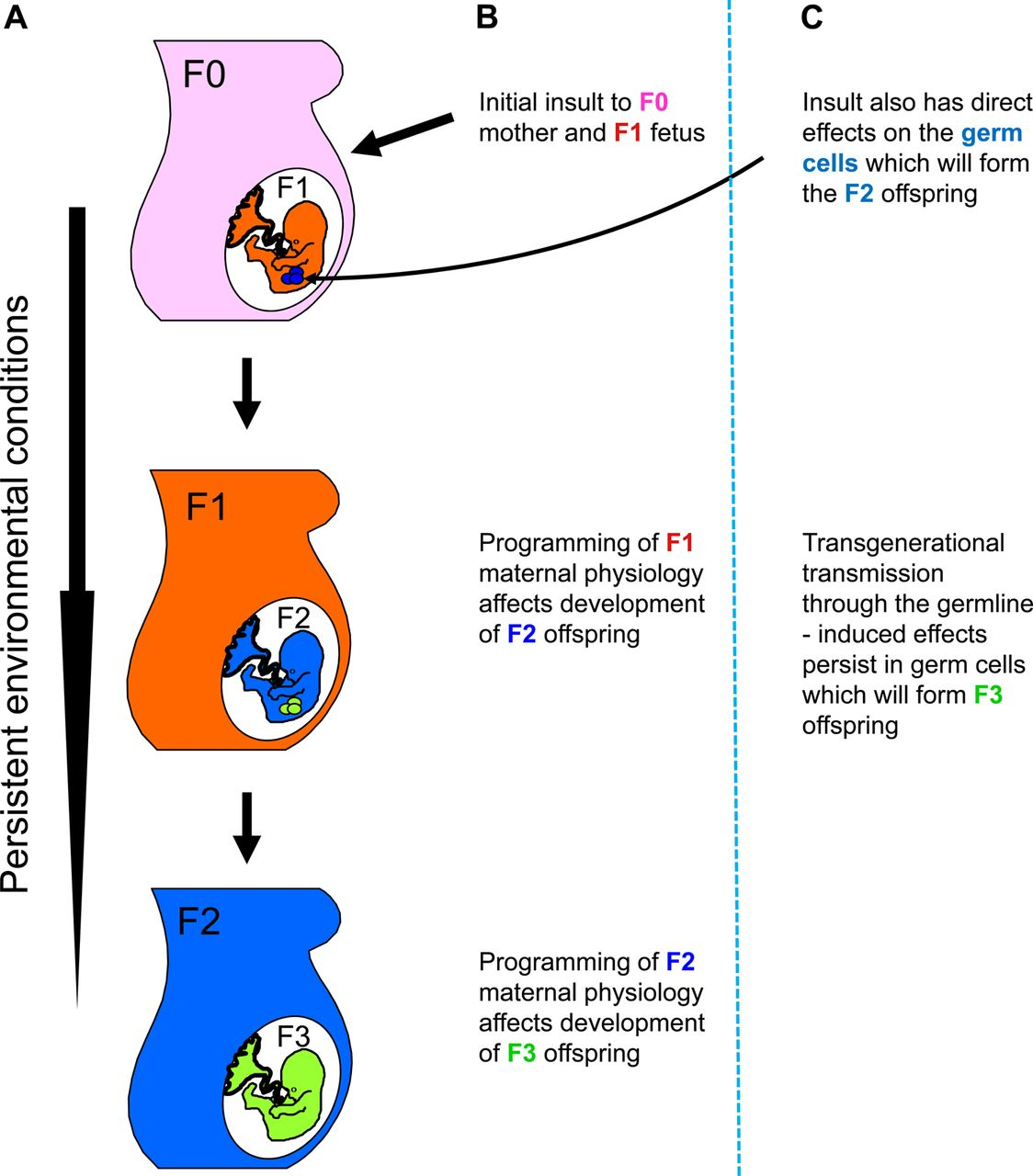 human disease and treatment pdf
