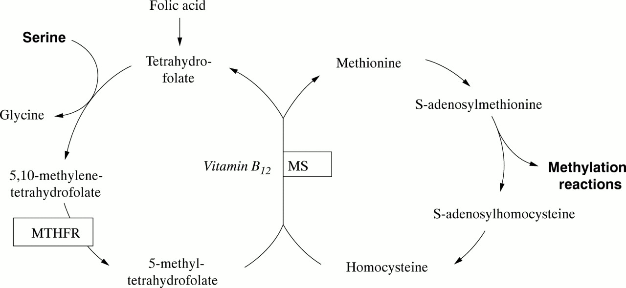 Nature and nurture in vitamin B12 deficiency | Archives of