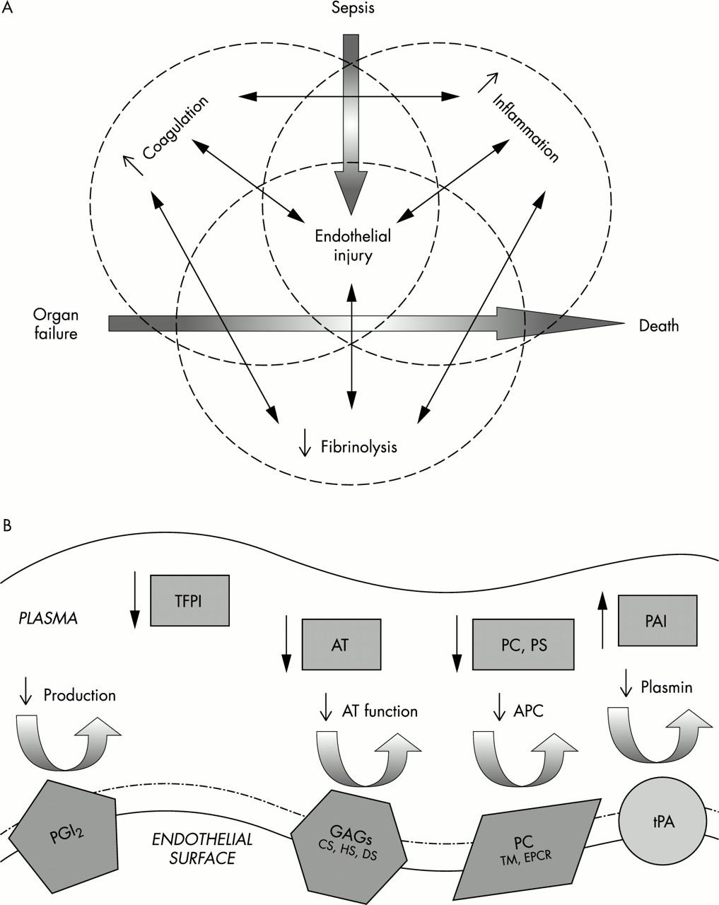 Pathophysiology of meningococcal meningitis and septicaemia ...