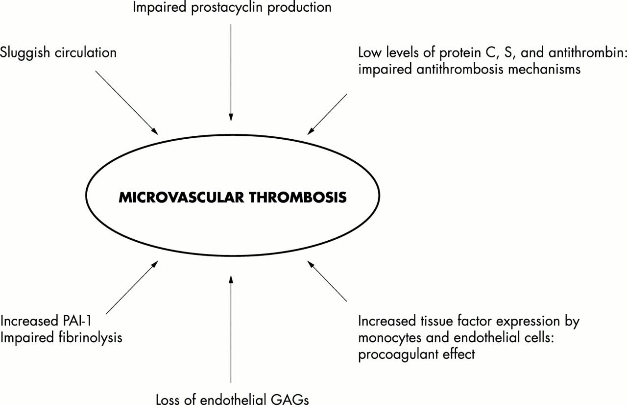 Pathophysiology of meningococcal men